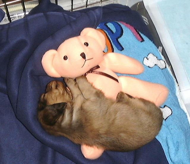 小さい麗寝てる.JPG
